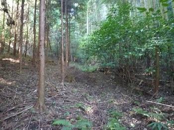 P1060706林道終点から山道へ、左ヒノキ林.JPG
