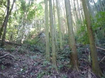 P1060707荒れ気味のスギ植林谷.JPG