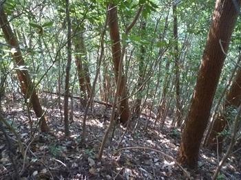 P1060716植林・雑木低木尾根.JPG