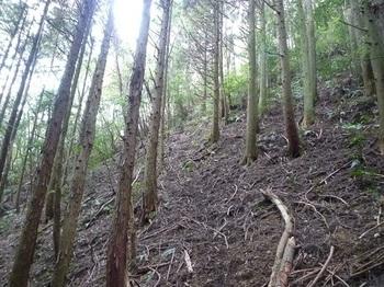 P1060754市境の植林斜面.JPG