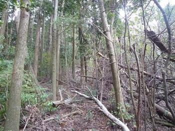 P1060756植林境尾根.JPG
