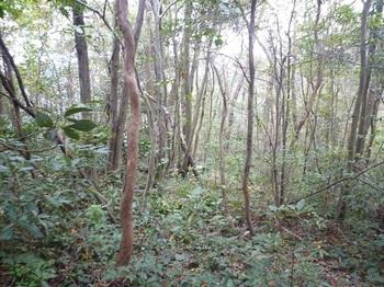 P1060760雑木疎林ヤブの縦走尾根.JPG