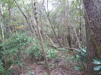 P1060761雑木疎林ヤブの縦走尾根.JPG