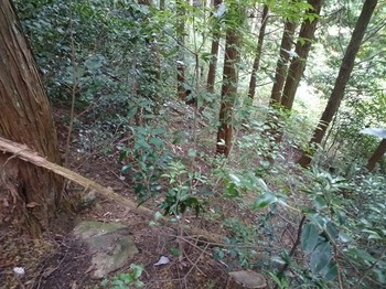 P1060782植林帯急斜面の下り.JPG