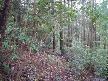 P1060805植林境.JPG