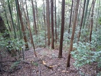 P1060822植林・雑木低木.JPG