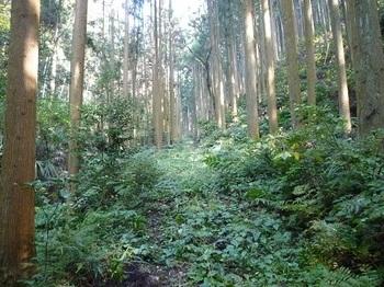 P1060846林道.JPG