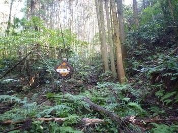 P1060848林道終点.JPG