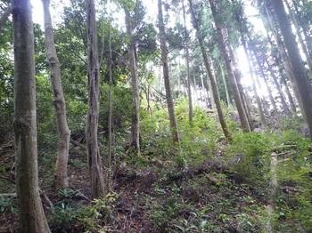 P1060879植林境尾根.JPG