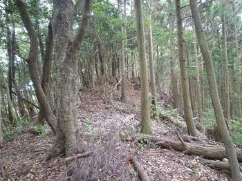 P1060881植林境・小ピーク.JPG