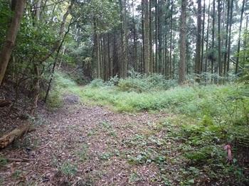 P1060896北側に林道.JPG