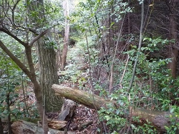 P1060902植林境ヤブ.JPG