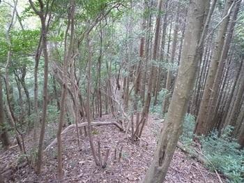 P1060904植林境.JPG