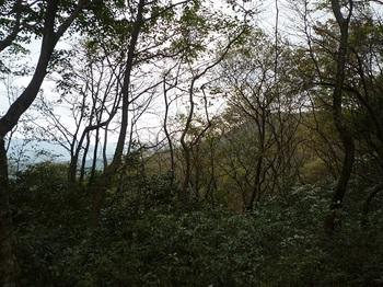 P1060919山頂手前鞍部から樹間越しに草添山方面.JPG
