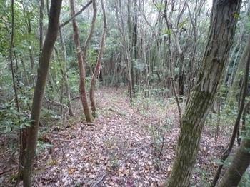 P1060925山頂北方向の雑木尾根(縦走路).JPG
