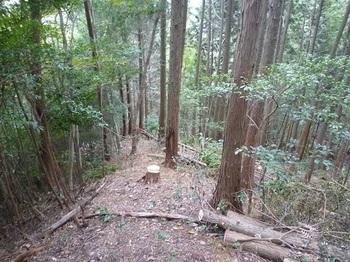 P1060932植林境.JPG