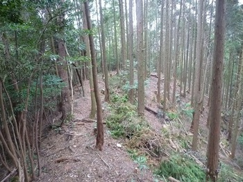 P1060933植林境.JPG