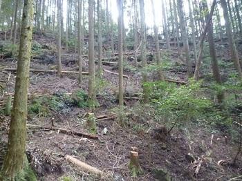 P1060937植林斜面.JPG