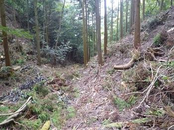 P1060938植林谷の踏み跡.JPG