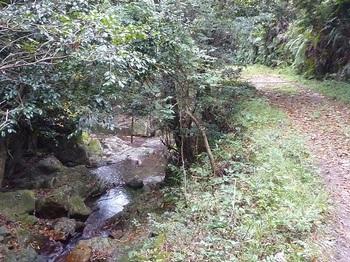 P1060952渓流沿いの林道.JPG