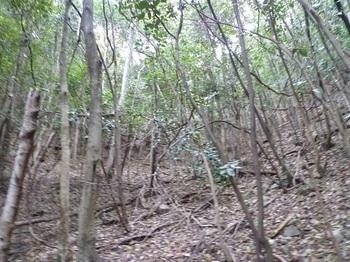 P1060989雑木疎林谷を詰める.JPG