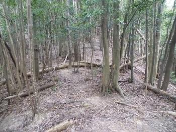 P1060990雑木疎林尾根の鞍部.JPG