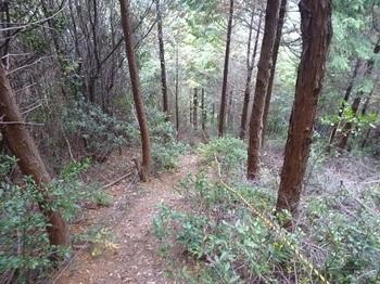 P1070049ヒノキ林境を急降下.JPG