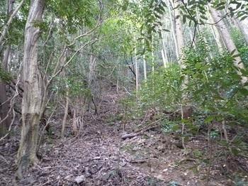 P1070169植林境を登る.JPG