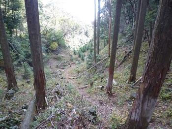 P1070216 440m鞍部東側下山路.JPG