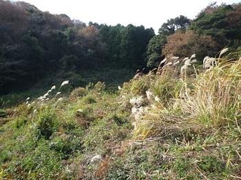 P1070255荒地の踏み跡.JPG