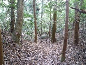 P1070302登山道(スギ植林帯).JPG