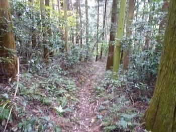 P1070304登山道(スギ植林帯).JPG