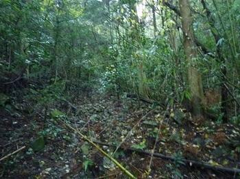 P1070330荒れ林道.JPG