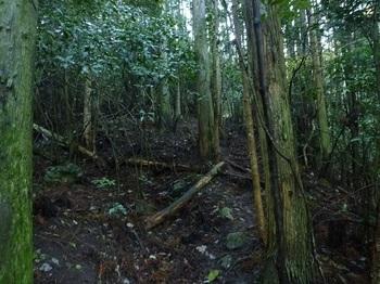 P1070335上部の山道.JPG