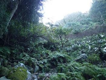P1070346雑木低木の谷.JPG