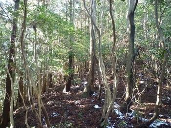 P1070361植林境尾根に上がる.JPG