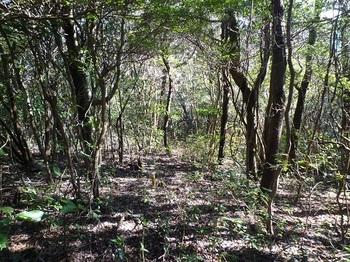 P1070368雑木林の切開き.JPG