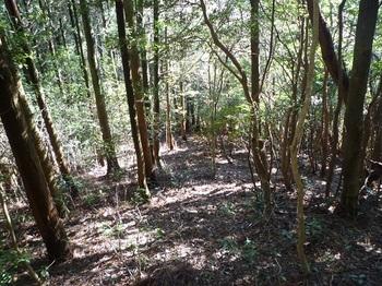 P1070369植林境.JPG