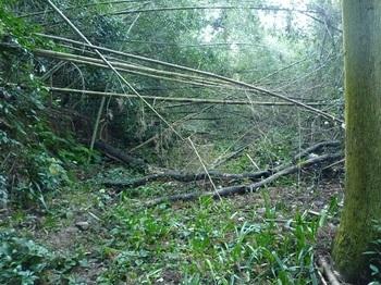 P1070397荒れ気味の林道.JPG
