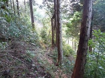 P1070466植林境のトラバース道.JPG