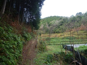 P1070512耕作地沿いの山道とフェンス.JPG