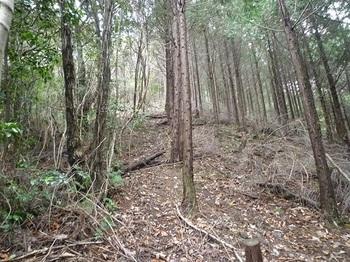 P1070530ヒノキ林境を直登.JPG