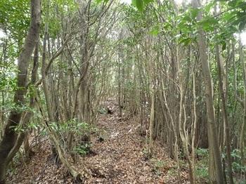 P1070562雑木やせ尾根.JPG