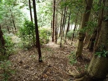 P1070604ヒノキ植林頂部.JPG