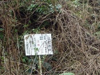 P1070614公社造林足河内事業地.JPG