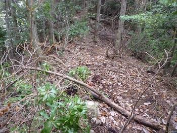 P1070650植林尾根を進む・地籍多角点コン杭.JPG