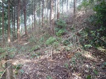 P1070659山道が左へ分岐・ヤブ尾根を登る.JPG