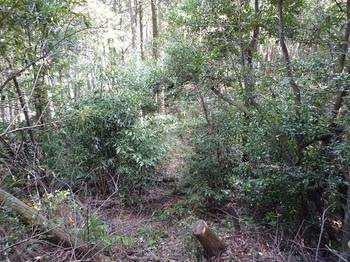 P1070800植林境.JPG