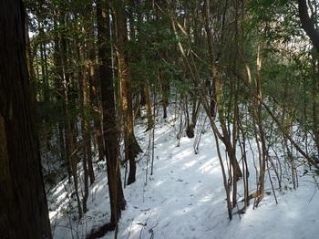 P1070852左ヒノキ林境.JPG