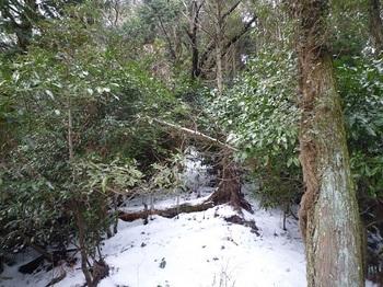 P1070867倒木等で荒れ気味の植林尾根.JPG